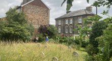 Over 500 visitors to our Hidden Garden