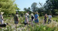 Visit to Langham Walled Gardens